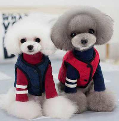 Dog Warm Winter Clothes 06-0238